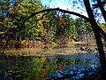 Arching Tree In Fall (59321634).jpeg