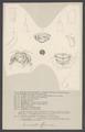 Armadillo officinalis - - Print - Iconographia Zoologica - Special Collections University of Amsterdam - UBAINV0274 006 03 0042.tif