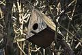 Artificial nest (2063105278).jpg
