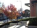 Atwater Village, Los Angeles, California, USA.JPG