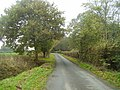 Autumn Colours on the small road - geograph.org.uk - 1571005.jpg