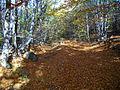 Autumn in Lozen Mountain.JPG