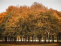 Autumn in Phoenix Park (30805604183).jpg