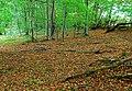 Autumn leaves near Helen's Bay - geograph.org.uk - 1503523.jpg