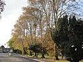 Autumnal trees at Newport Church Litten.JPG