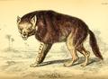 Azara brown hyena.png