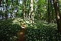 Bärlauchblüte auf dem Ithkamm.jpg