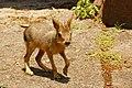 Bambi (194080343).jpeg