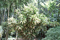 Bambouseraie de Prafrance 20100904 038.jpg