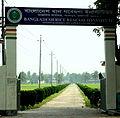 Bangladesh rice research institute, rajshahi.JPG