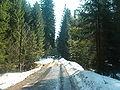 Barania Góra-sciezka dydaktyczna 1.jpg