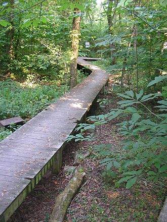 Beargrass Creek State Nature Preserve - Footbridge over seasonal wetlands in the nature preserve