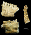 Beeswax as Dental Filling on a Neolithic Human Tooth - Journal.pone.0044904.g001.png