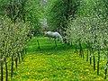 Belka prolece 2009 - panoramio.jpg