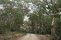 Benandarah NSW 2536, Australia - panoramio (45).jpg