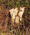 Berkenstobbe (Betula) aan slootkant. Locatie, Natuurterrein De Famberhorst 02.jpg