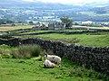 Bewdley Farm - geograph.org.uk - 907328.jpg