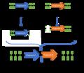 BioBricks assembly.png