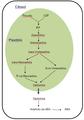 Biosíntesis de ABA.PNG