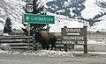 Bison in Gardiner, MT. (50a8fe1b-643b-4cb0-aaf6-51fb8dc11dc0).jpg