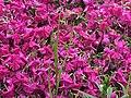 Blüten Stadtwald.jpg