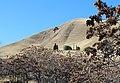 Black Diamond Mines Regional Preserve - panoramio (6).jpg