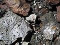 Black smoker rocks (sulfidic wad) (Helen Iron-Formation, Neoarchean, 2696-2749 Ma; Sir James Pit, Eleanor Iron Range, Ontario, Canada) 27 (48069981427).jpg