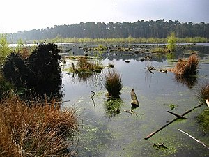 Delamere Forest - Blakemere Moss in 2004, six years after it was flooded