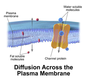 Cell membrane - Illustration depicting cellular diffusion