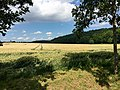 Blick auf den Steinberg - panoramio (3).jpg