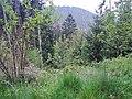 Blick in das Teinachtal - panoramio (1).jpg