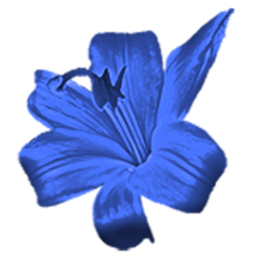 Blueflower.png