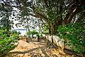 Bodhi Baum, Sri Lanka.jpg