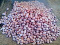 Boiled Groundnut.jpg