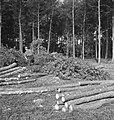 Bosbewerking, arbeiders, boomstammen, Bestanddeelnr 253-5935.jpg