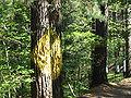 Bosque de Oma (1).JPG