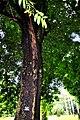 Botanic garden limbe124.jpg