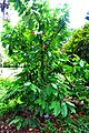 Botanic garden limbe22.jpg