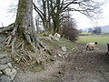 Boundary between two fields. - geograph.org.uk - 139620.jpg