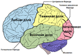 Brain diagram ru.png