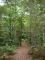 Branksome Park, Martello Woods - geograph.org.uk - 1502864.jpg