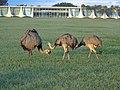 Brasilia DF Brasil - Emas no Palacio da Alvorada - panoramio.jpg