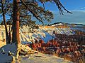 Brcye canyon winter snow pine trees Utah.jpg