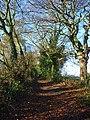 Bridleway, Ewelme - geograph.org.uk - 1082159.jpg