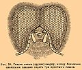 Brockhaus and Efron Encyclopedic Dictionary b16 817-1.jpg