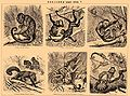 Brockhaus and Efron Encyclopedic Dictionary b42 496-5.jpg