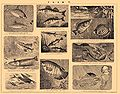 Brockhaus and Efron Encyclopedic Dictionary b53 432-8.jpg