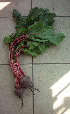 Rote Bete (Beta vulgaris subsp. vulgaris Conditiva-Gruppe)