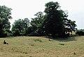 Burstwick Castle - geograph.org.uk - 209326.jpg