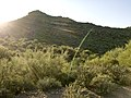 Butcher Jones Trail - Mt. Pinter Loop Trail, Saguaro Lake - panoramio (67).jpg